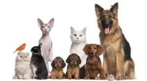 Group of pets