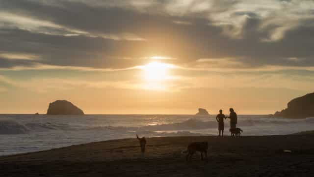 Friends and dogs at Zipolite beach during the sunset in Oaxaca, Mexico