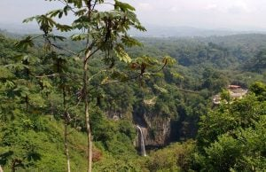 Life in the cloud forest of Xalapa, Veracruz