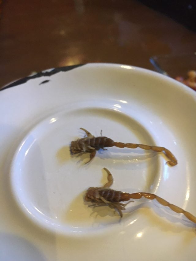 Sal de Gusano restaurant in Guadalajara serves a scorpion-based dish