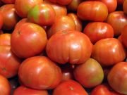 Tomatoes in Mexico
